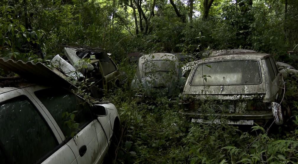 Veículos quase somem em meio ao mata alto na propriedade em Valinhos (SP) (Foto: Reprodução/EPTV)