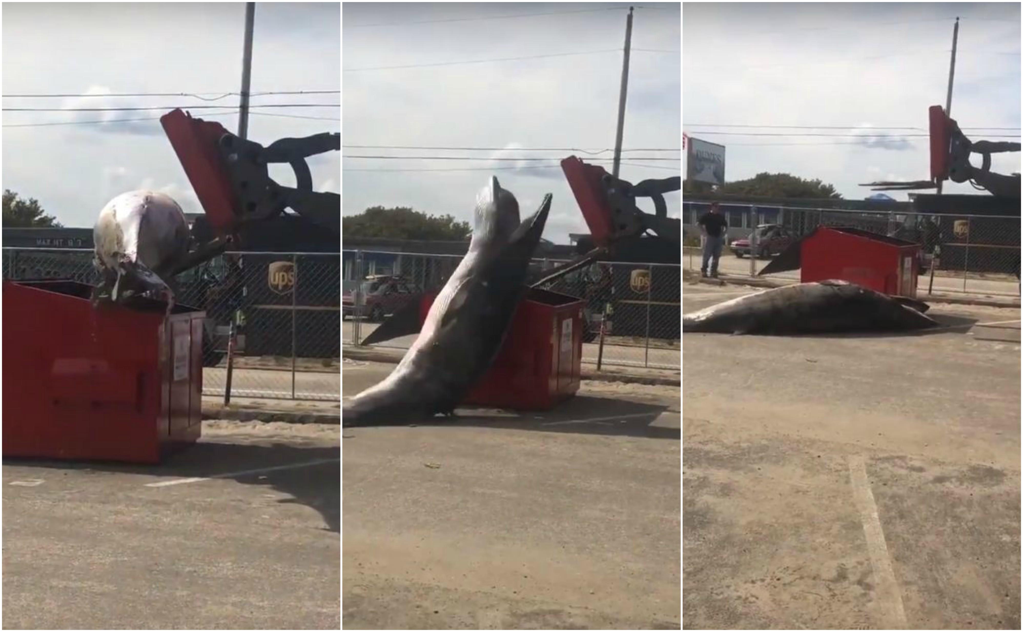 A remoção desastrada da baleia-minke. (Foto: Reprodução / YouTube)