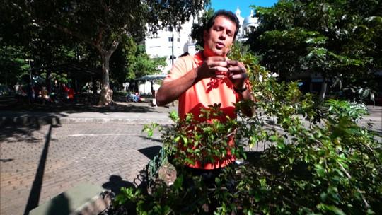 Moradores cultivam horta comunitária em plena praça pública de bairro carioca