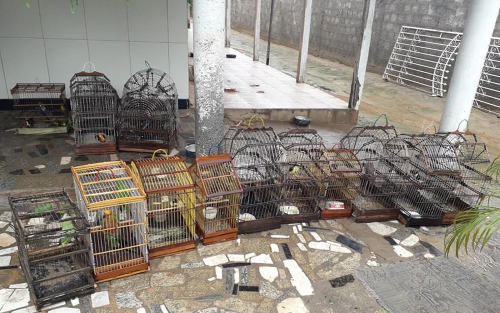 Aves apreendidas seriam vendidas ilegalmente — Foto: Divulgação/SSP/SE
