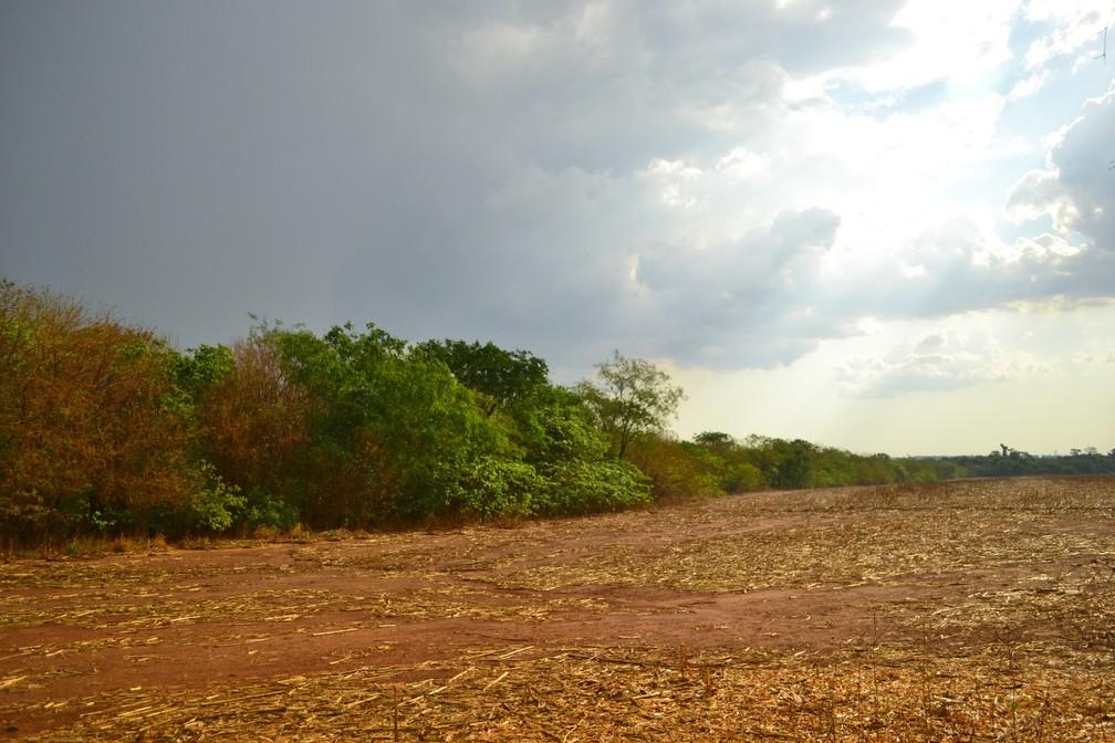 Área de restauração em uma fazenda do MT.  — Foto: Dannyel Sá/Instituto Socioambiental (ISA).
