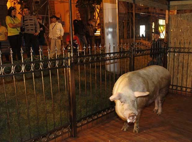 Porco chamado 'Funtik' tenta repetir o sucesso do polvo Paul. (Foto: Gleb Garanich/Reuters)