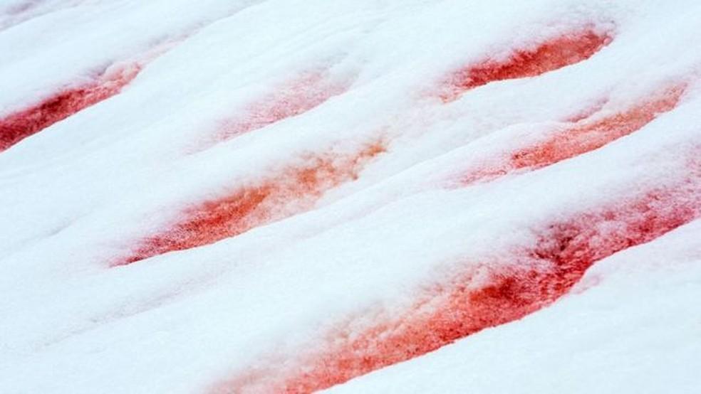 Em alguns lugares, as algas podem produzir uma coloração rosa suave na neve, enquanto em outros pode ser vermelho sangue — Foto: ASHLEY COOPER PICS/ALAMY