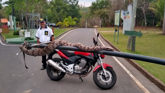 Foto: (Sema-MT/ Divulgação)