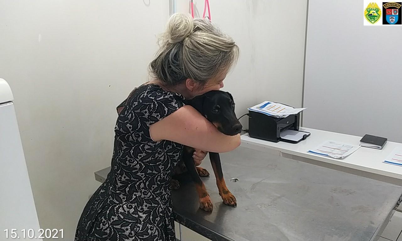 Idoso é filmado espancando cachorro no Paraná; VÍDEO