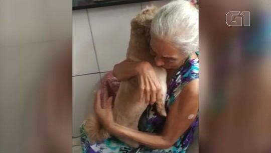 Idosa reencontra cão desaparecido e vídeo com reação dela viraliza na internet