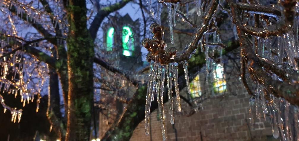 Árvore congelada no Centro de São Joaquim — Foto: Mycchel Hudsonn Legnaghi/São Joaquim Online