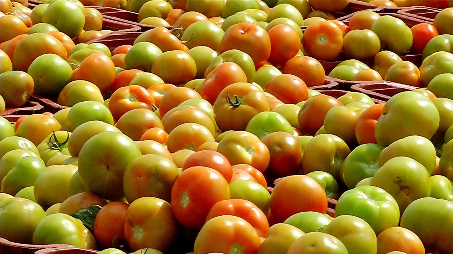 Batata e tomate ajudam a inflacionar preço da cesta básica nos supermercados em Presidente Prudente