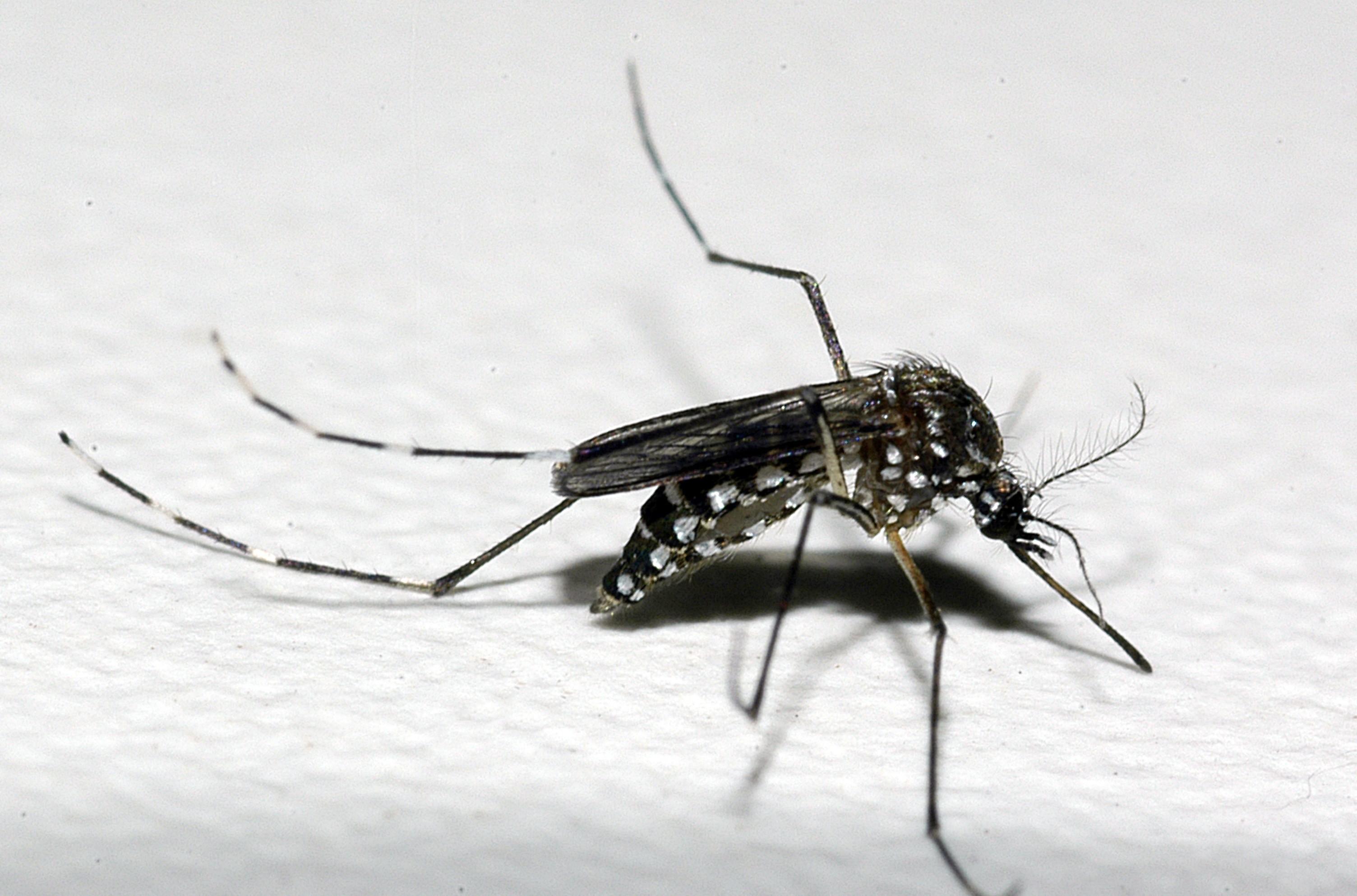 Cidades do Sul de MG vão receber recursos para combate à dengue; valores chegam a R$ 200 mil - Noticias