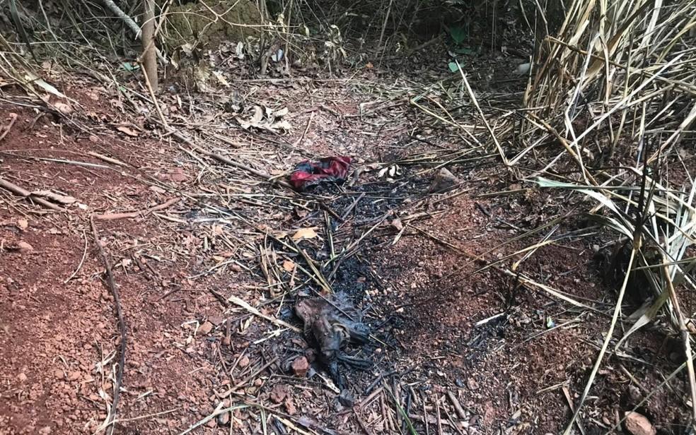Local onde corpo de Marcelo Oliveira teria sido carbonizado ente Ouro Verde e Damolândia — Foto: Reprodução/Polícia Civil