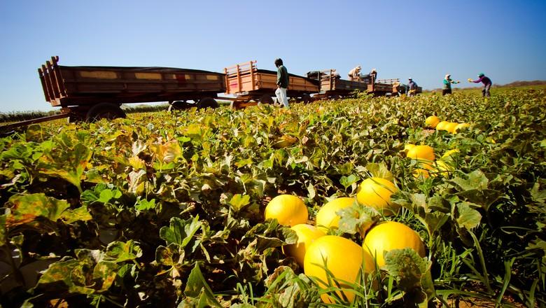 melao-fruta (Foto: Georgina Santiago/Ed. Globo)