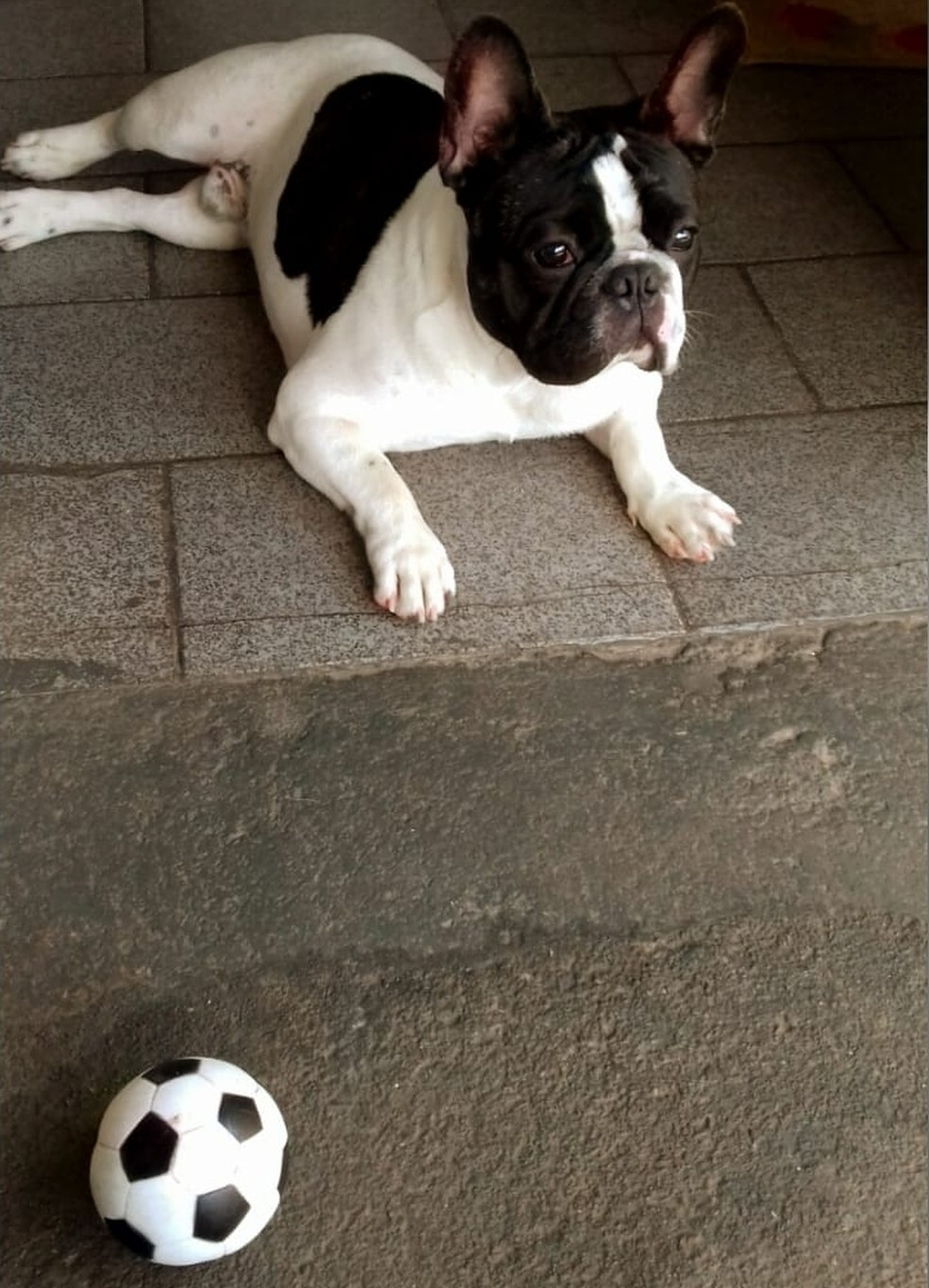 Cachorro retornou para casa e se recupera bem  — Foto: Arquivo Pessoal/Valdirene Santos
