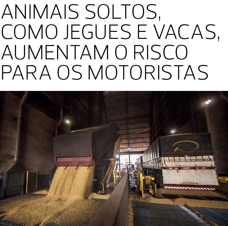 Caminho da Safra (Foto:  )