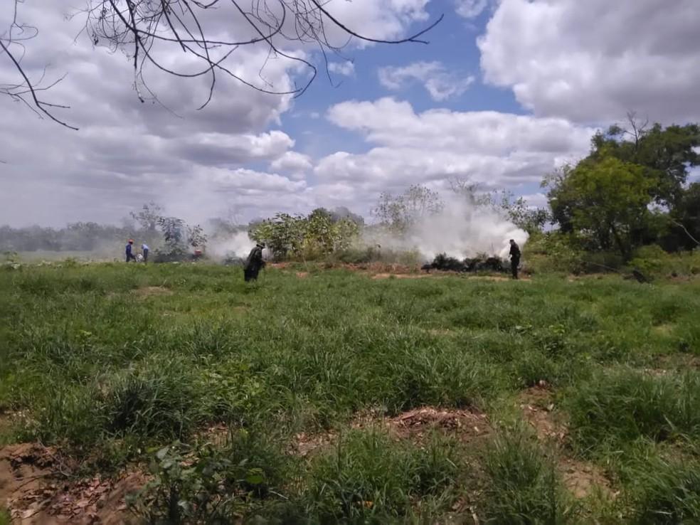 maconha foi localizada e incinerada em ilhas do Rio São Francisco — Foto: Divulgação / 2ª CIPM