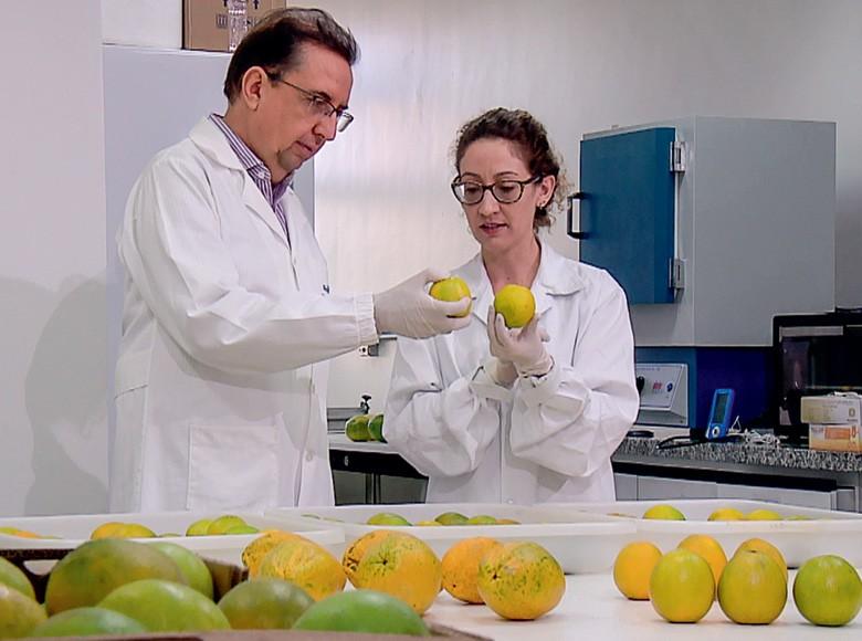 Pesquisadores do Laboratório Nacional de Nanotecnologia para o Agro, da Embrapa (Foto: Reprodução/Programa Globo Rural)