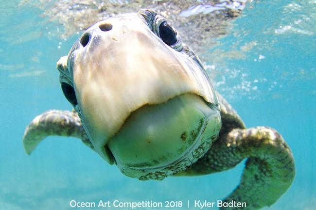 A tartaruga é a estrela do clique do fotógrafo norte-americano Kyle Badten (Foto: Kyle Badten)