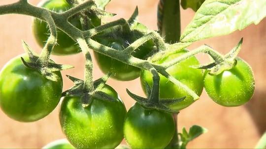 Produção de alimentos orgânicos certificados aumenta em propriedades rurais de Londrina