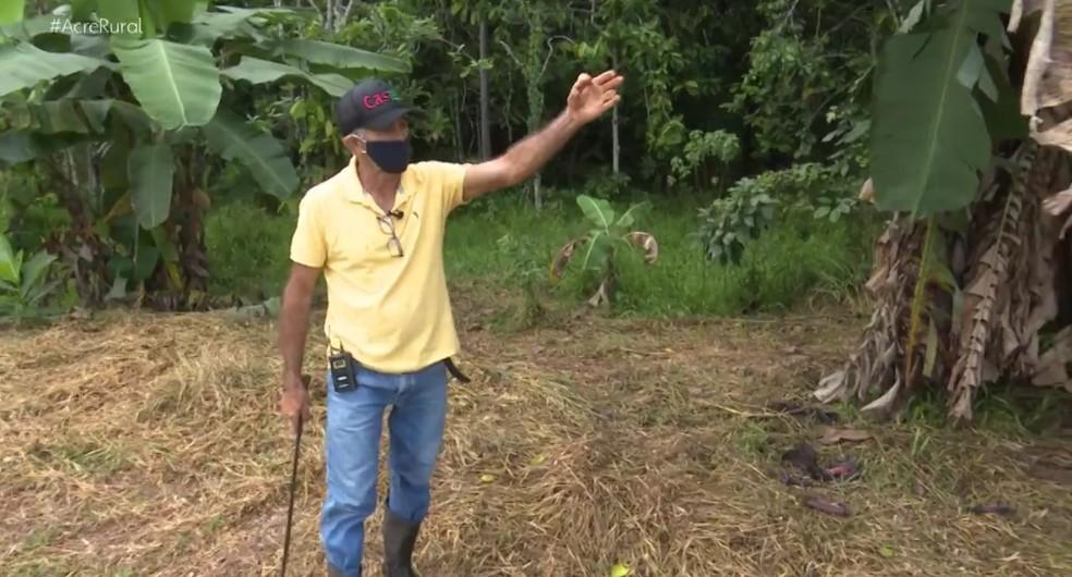 Zé Balela, como é conhecido José Francisco, de 66 anos, sonhava em ser pecuarista, mas mudou de ideia e decidiu plantar árvores em sua propriedade rural — Foto: Reprodução/Acre Rural