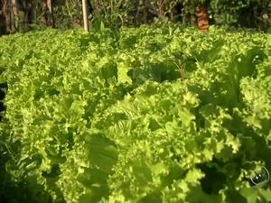 Nutricionista ressalta adesão de produtos orgânicos no mercado (Foto: Reprodução/TV TEM)