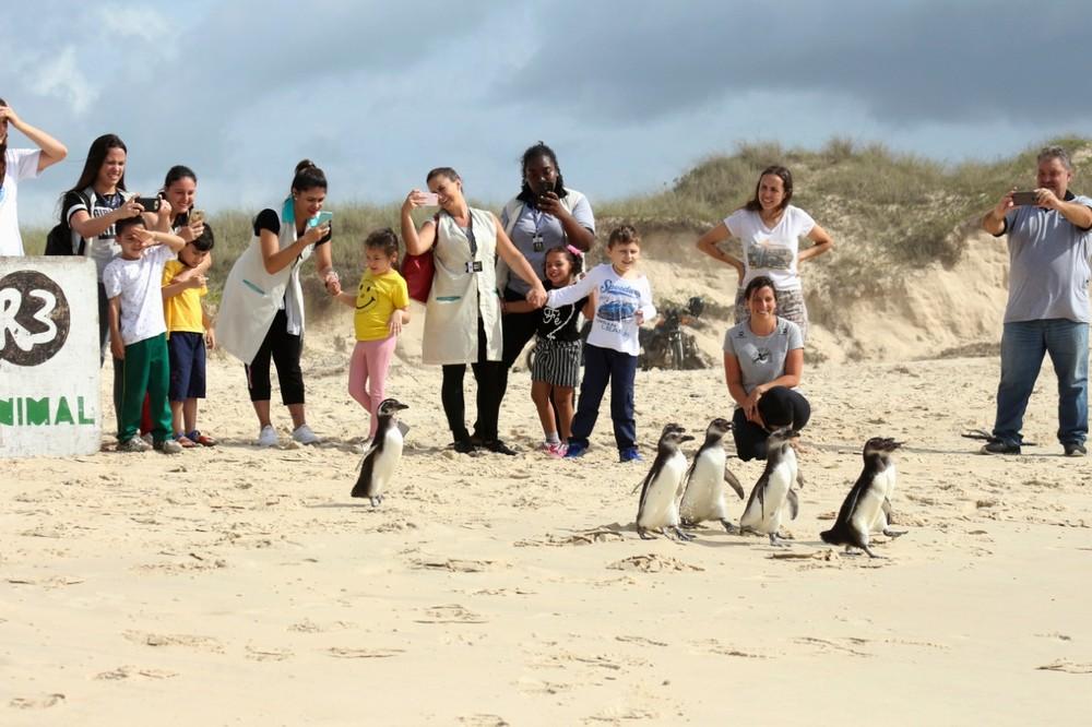Crianças com necessidades especiais participam da soltura de pinguins em praia de Florianópolis Whatsapp-image-2018-11-27-at-15.30.47