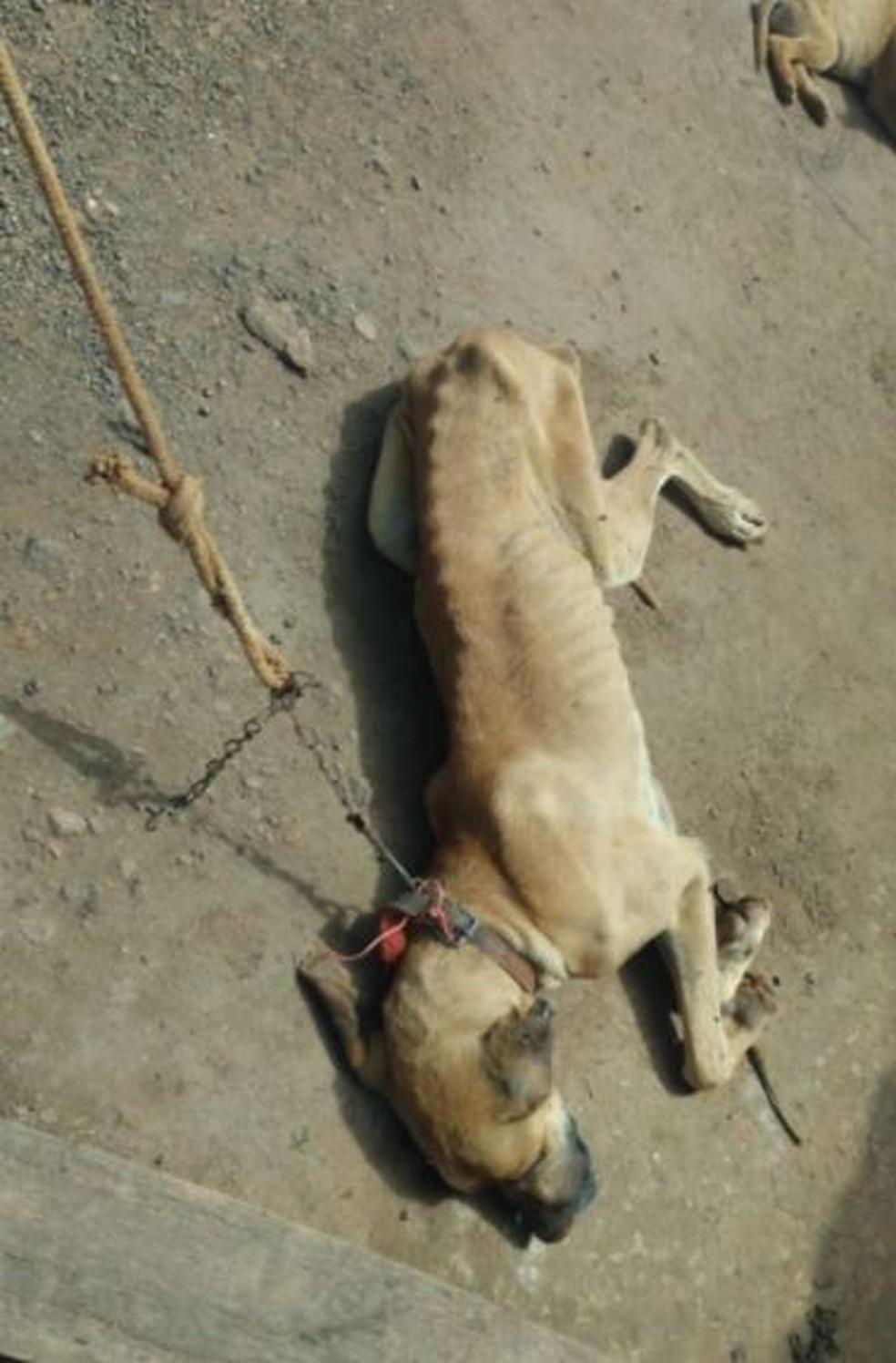 Cachorro tinha mau cheiro — Foto: Polícia Civil/Divulgação