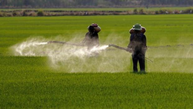 Agrotóxicos afetam polinizadores e podem prejudicar lavouras vizinhas que não são resistentes a eles (Foto: GETTY IMAGES VIA BBC)