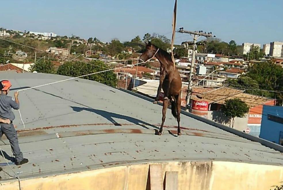 Cavalo sobe em telhado e resgate mobiliza Corpo de Bombeiros em Lins (SP) — Foto: Arquivo Pessoal/J. Serafim