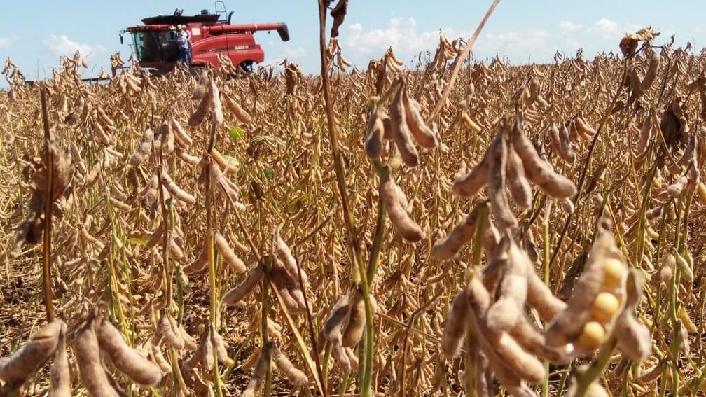 Soja impulsionou mais uma vez o desempenho do agronegócio brasileiro em 2018 — Foto: Anderson Viegas/G1 MS