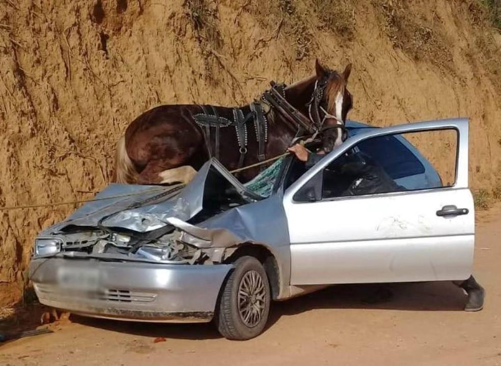 Cavalo ficou preso em cima de carro em Canelinha — Foto: Marciano Machado/Olhovivocam