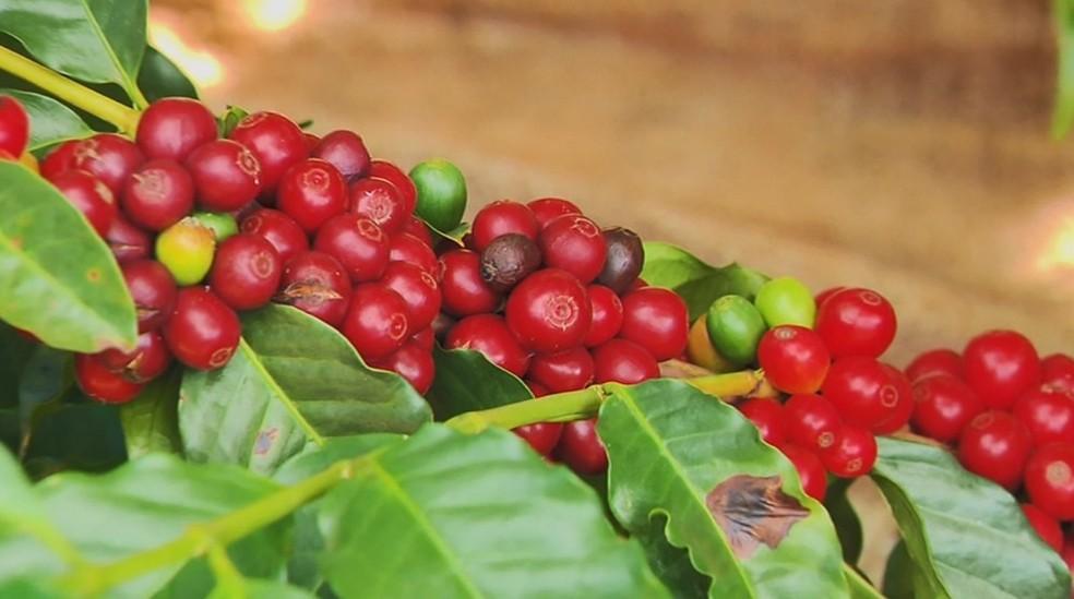 Produtores de café buscam alternativas para se protegerem de preços baixos — Foto: Reprodução/EPTV