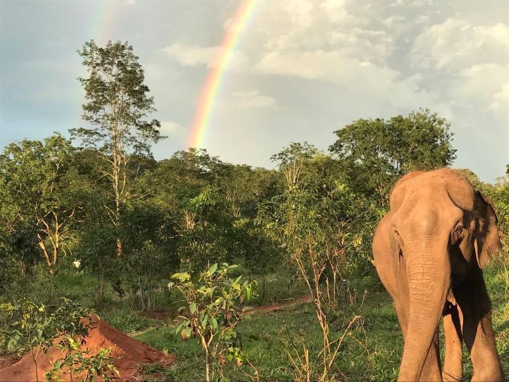 Local e animais são  preservados por voluntários que trabalham no local — Foto: Santuário dos Elefantes/ Divulgação