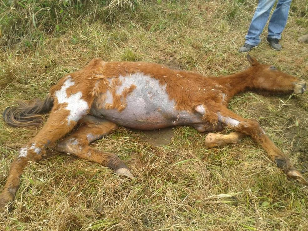 Animal foi encontrado após denúncia anônima para a ONG — Foto: Arquivo pessoal/Maurício Alves Affonso