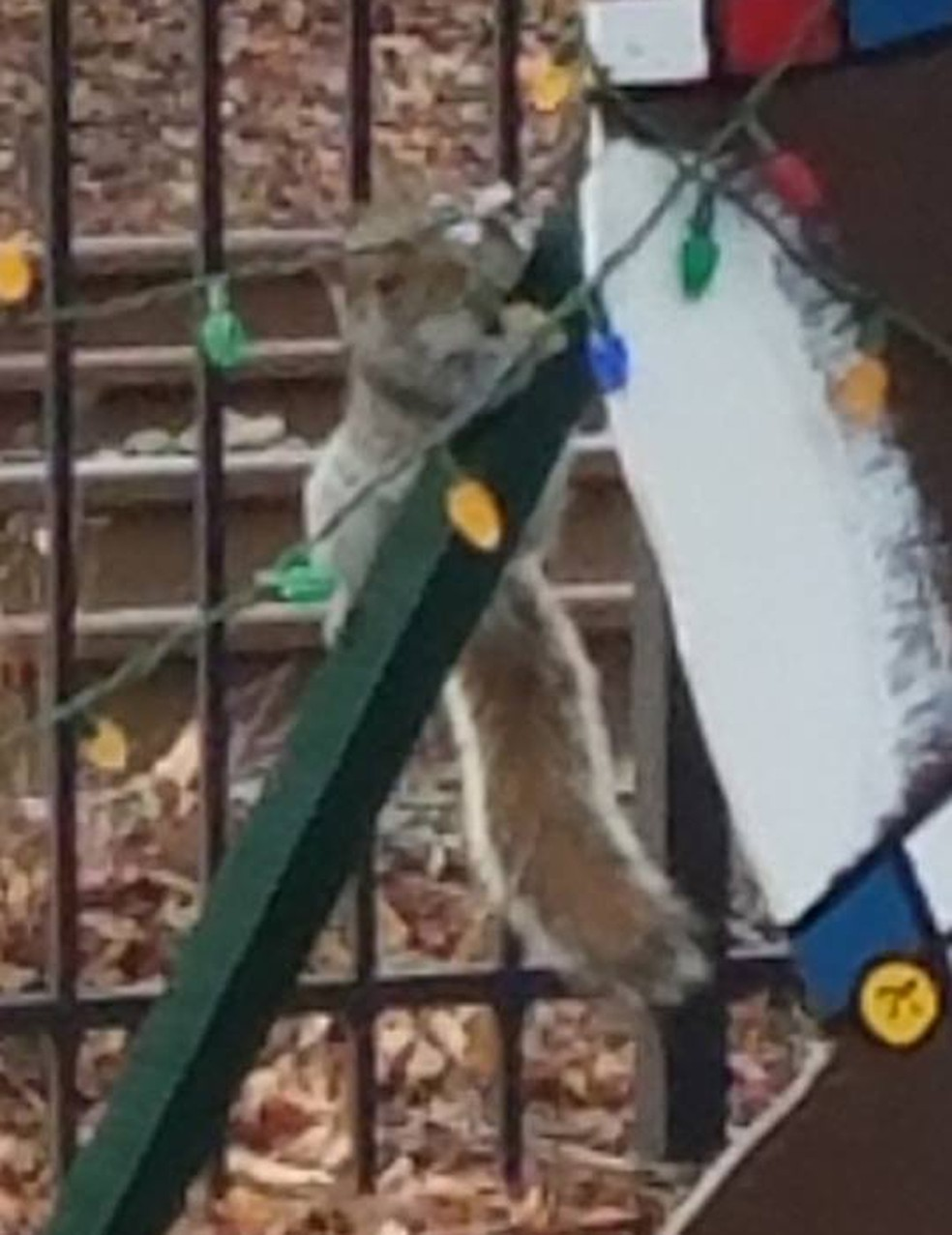 Esquilo é acusado de 'vandalizar' luzes de Natal nos EUA (Foto: Sea Girt Police Department/Facebook)