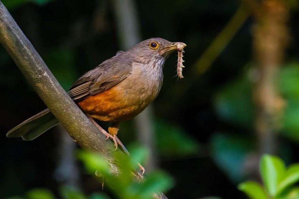 Sabiás e beija-flores são algumas das aves citadas na música (Foto: Zé Edu Camargo/Dicas da Gente)