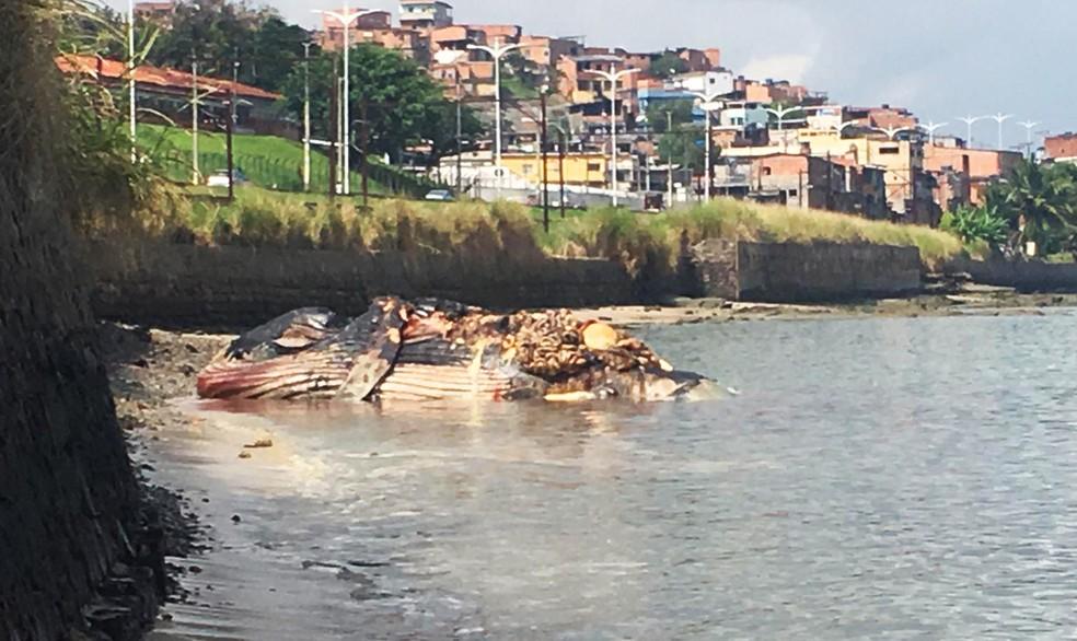 Moradores reclamam de mau cheio e relatam medo de doenças — Foto: Phael Fernandes/G1 Bahia