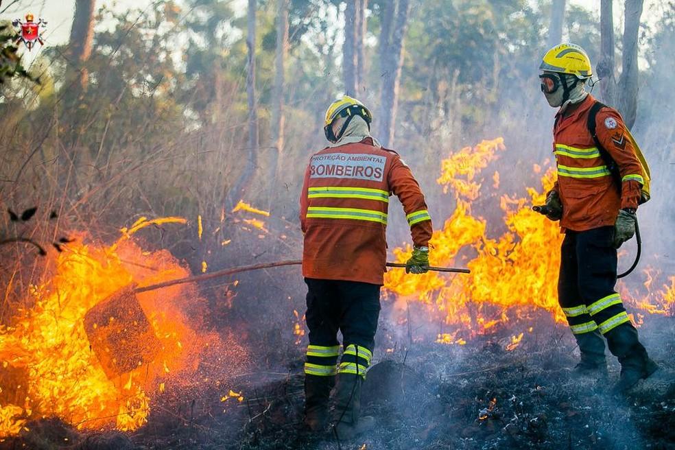 Bombeiros combatem incêndio em uma área de Cerrado, no DF, em imagem de arquivo — Foto: Corpo de Bombeiros do DF/ Divulgação