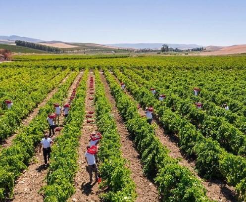 A vinícola siciliana Donna Fugata: rótulo em promoção na World Wine
