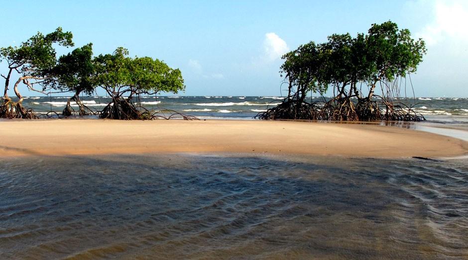 Ilha de Marajó, arquipélago próximo à capital paraense (Foto: Wikimedia Commons)