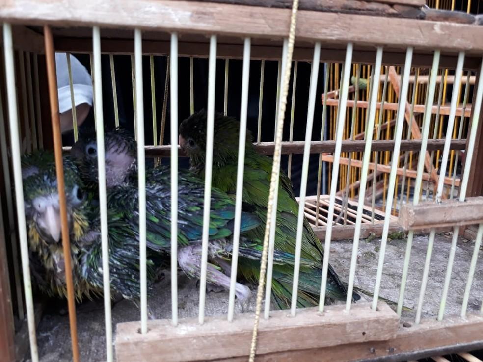Resultado de imagem para Quase 200 aves silvestres são apreendidas e cinco pessoas são presas em Campina Grande