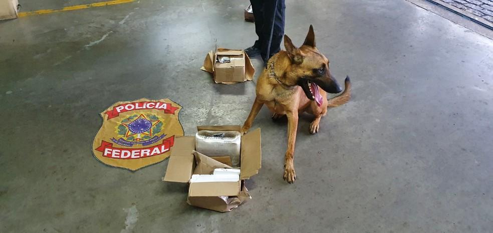 Cão farejador da PF encontra 5 kg de cocaína dentro de caixa nos Correios em Natal — Foto: PF/Divulgação