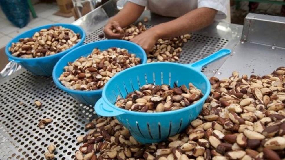 Estudo brasileiro inclui ganhos com produção de alimentos e matérias-primas da Amazônia  — Foto: Getty Images via BBC
