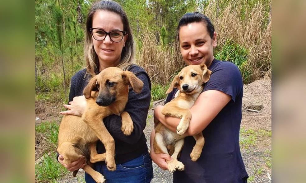 Dois filhotes foram resgatados às margens de rodovia em Buri — Foto: Silvia Padovani/ Divulgação