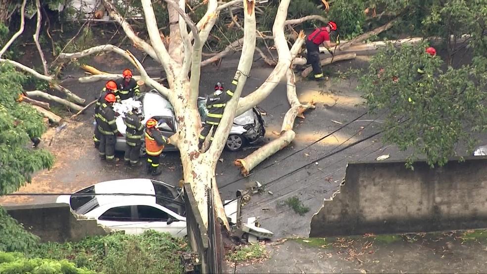 Queda de árvore na Santa Cruz em São Paulo — Foto: Reprodução/GloboNews