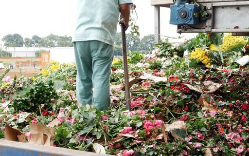 66% dos produtores de flores e plantas ornamentais podem falir em maio, alerta Ibraflor