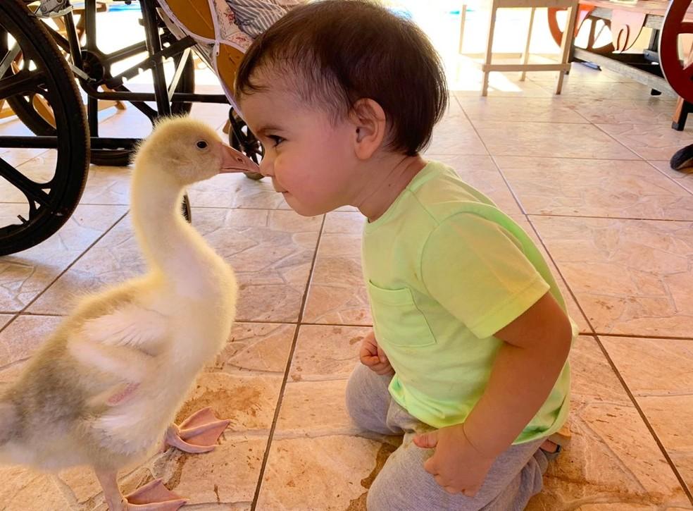 Família adquire gansos para ter em casa — Foto: Arquivo Pessoal