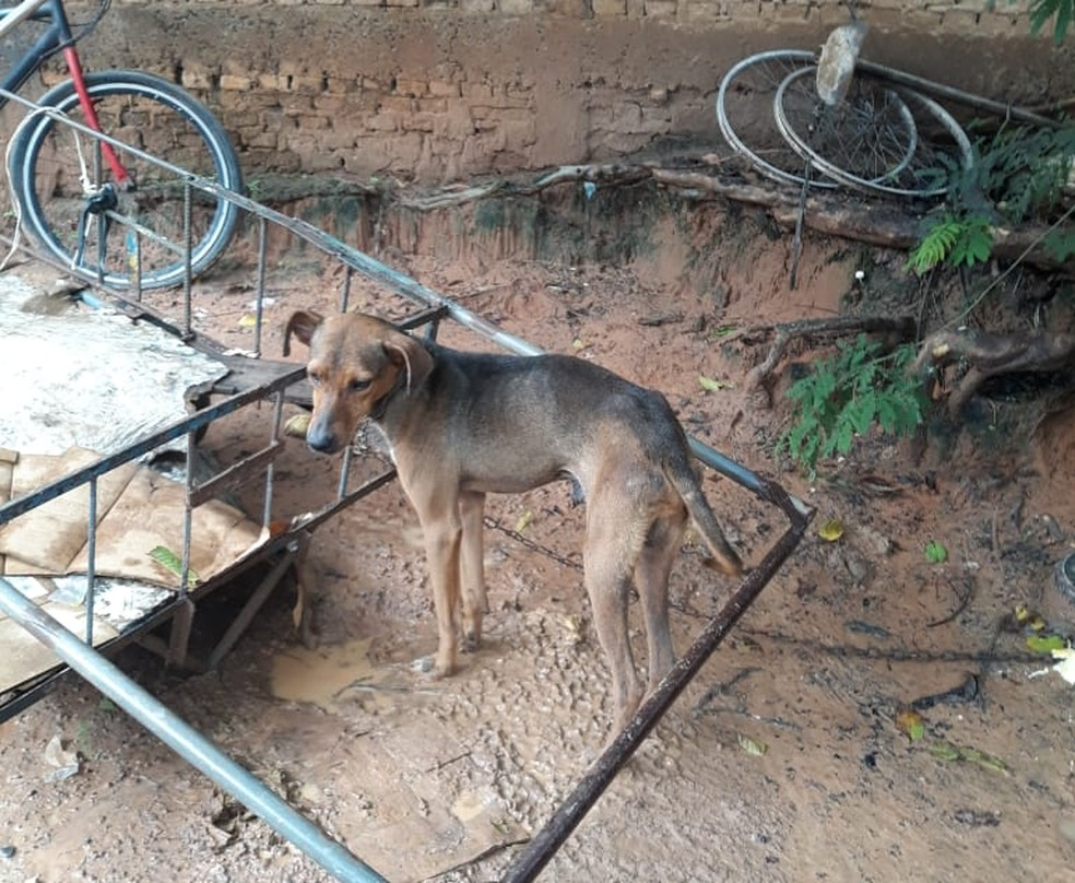 Segundo a ONG, cachorro estava amarrado a uma carreta de recolher papelão em Marília — Foto: Arquivo pessoal/Gabriel Fernando Francisco