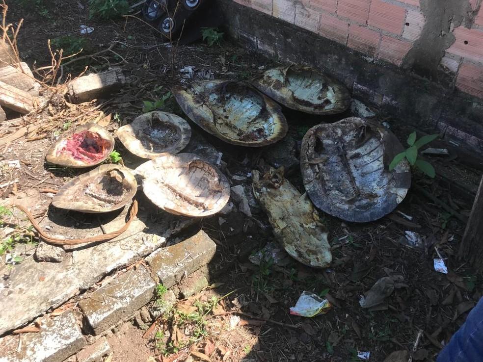 Delegado diz que encontrou cascos de tartarugas já consumidos — Foto: Polícia Civil/Divulgação