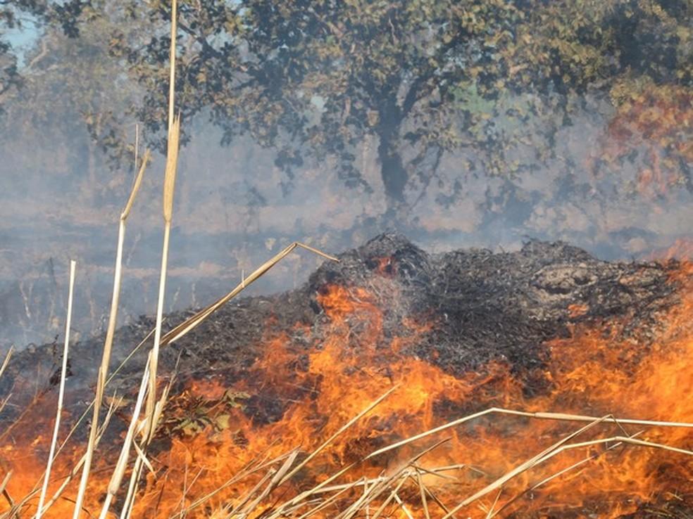 Focos de queimadas continuam aumentando no período de estiagem (Foto:  Elisangela Farias/G1 TO)