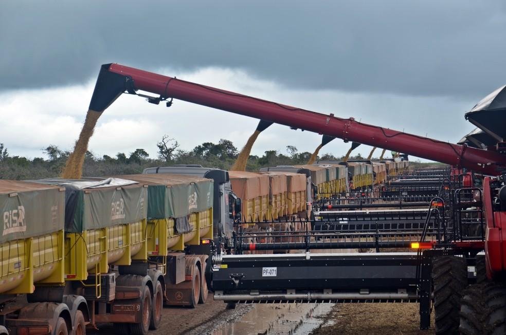 Para encher as 50 toneladas de cada caminhão é preciso de pelo menos cinco colheitadeiras cheias — Foto: André Schaun