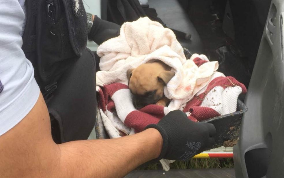 Filhote de cachorro resgatado após ser enterrado vivo no Guará, no DF (Foto: Polícia Militar do DF/Divulgação)